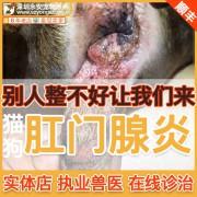 猫狗肛门腺炎治疗