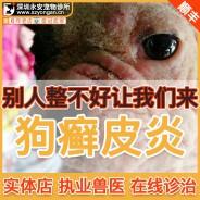 狗癣真菌皮炎-狗皮肤病治疗