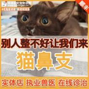 猫鼻支犬窝咳治疗